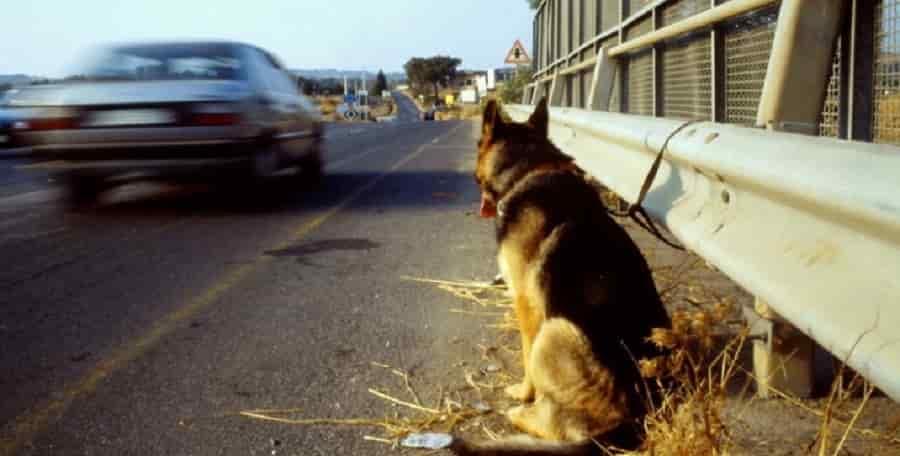 Bientôt une loi spécifique pour punir ceux qui abandonnent leur animal de compagnie