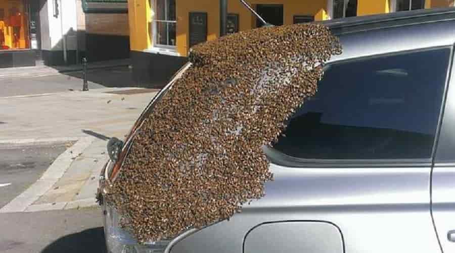 Un essaim d'abeilles suit une voiture pendant 2 jours pour sauver leur reine coincée dans le coffre