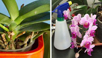 ORCHIDÉES : 3 ASTUCES SIMPLES ET EFFICACES POUR LES FAIRE RENAÎTRE